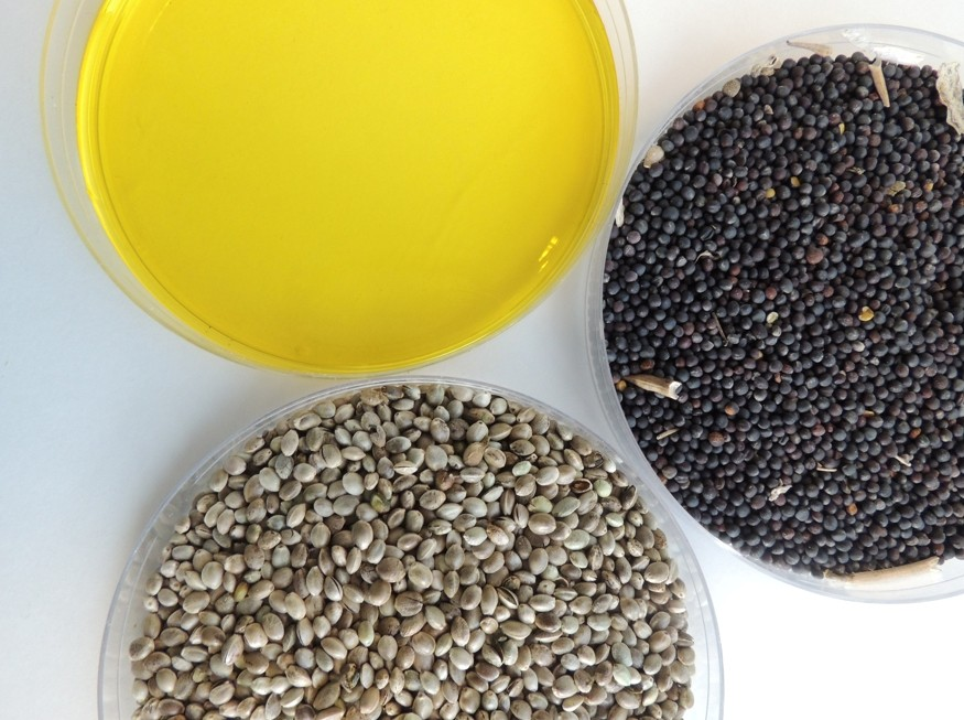 Seeds and oil - resized for web